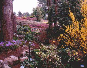 Horticultural Garden photo